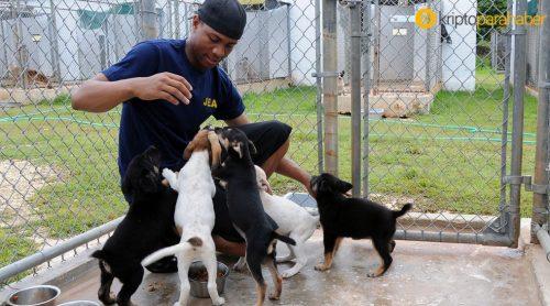 Hayvansever kripto yatırımcıları, Venezuela'daki hayvanlara yardım ediyor!