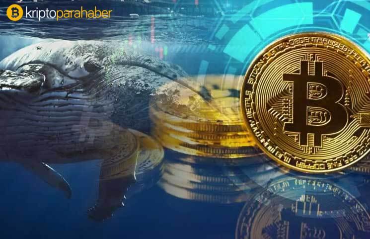 Bitcoin balinaları son iki yılın rekorunu kırdı! Halving'den beklenti büyük