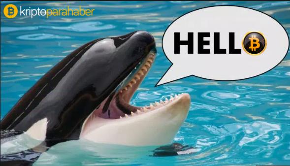 Bitcoin balinalarından peş peşe hamleler: BTC'yi dibe çekebilirler!
