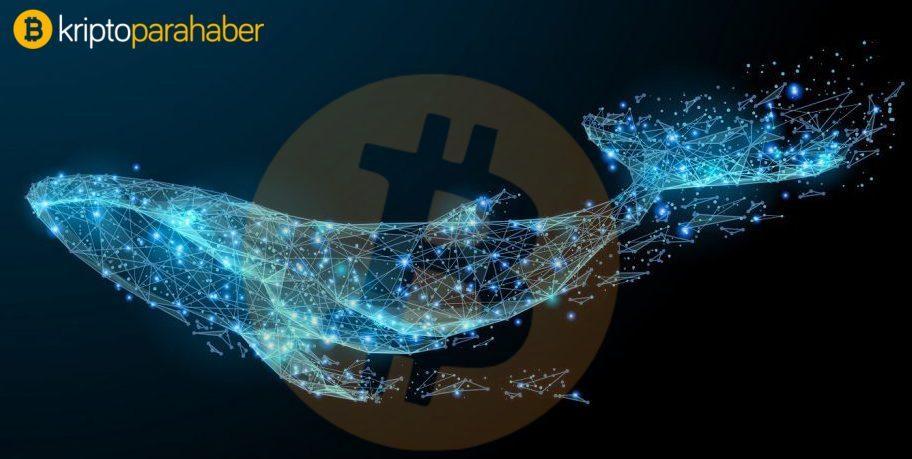 Bitcoin balinalarının sayısında kritik artış! Fiyatı yükseltebilir mi?