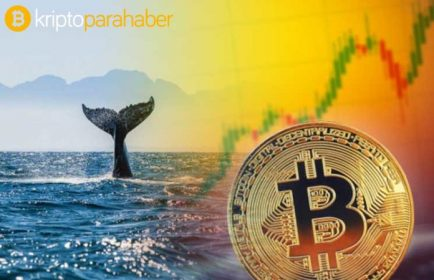 Bitcoin balina sayısı tüm zamanlar rekoru kırdı! Bu neyin göstergesi?