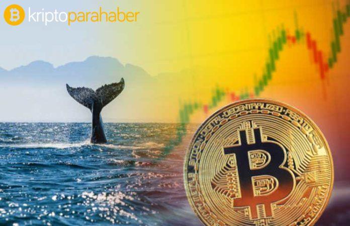 Bitcoin balinalarından devasa hamleler! Çin'deki saadet zinciri mi BTC boşaltıyor?