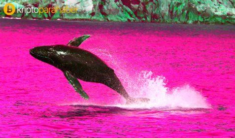 7 senedir uyuyan Ripple balinası hareketlendi: 40 milyon XRP taşındı!