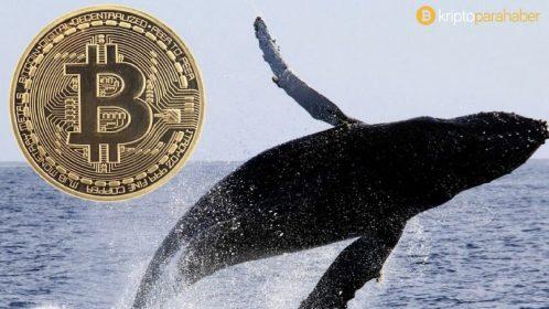 Bitcoin balinalarının Eylül ayından bu yana biriktirdiği BTC miktarı dudak uçuklatıyor