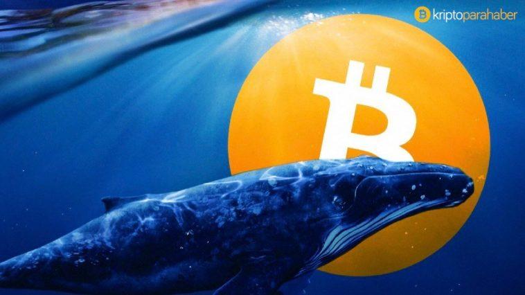 Bitcoin balina sayısı tüm zamanların en yüksek seviyesine ulaştı!
