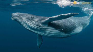 Piyasa canlandı, Bitcoin ve Ethereum balinaları hareketlendi!