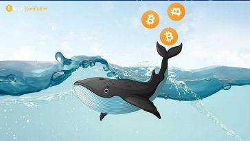 Bitcoin balinalarının azalması kötüye mi işaret ediyor?