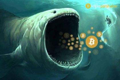 Bitcoin 19.300 dolara ulaştığında balinalar ne yaptı? Kritik veriler açığa çıktı!