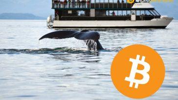 Bitcoin 48.500 dolara giderken balinalar 4 milyar dolar daha transfer gerçekleştirdi
