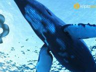 Bitcoin balinası milyon dolarları taşıdı – dump mı geliyor?