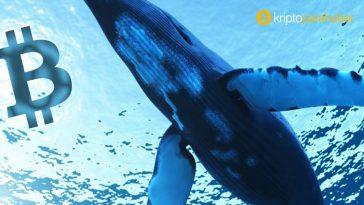 Balinalar ve kurumların kripto ticaret stratejisi açığa çıktı! Farklı ne yapıyorlar?
