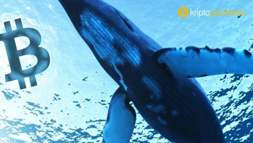 Bitcoin balinalarındaki artış ne anlama geliyor?