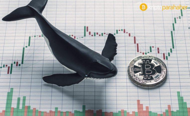 Kripto para endüstrisinin ilk altın balinası belli oldu! Peki altın balina nedir?