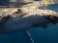 Milyar dolarlık balina transferi kripto çöküşünü tetiklemiş olabilir