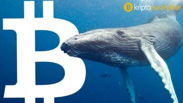 Tarihin en büyük Bitcoin balinalarından biri milyar dolarlık BTC taşıdı! Neler oluyor?